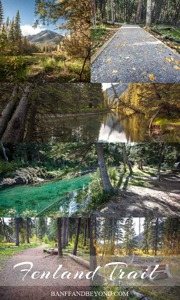 fenland-trail-easy-walk-banff-national-park-flat-scenic-pathway-trees-forty-mile-creek